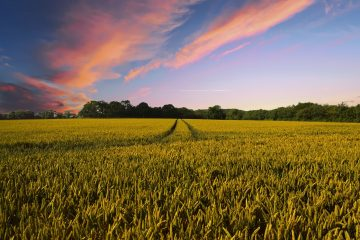The importance of screening pesticides in crops